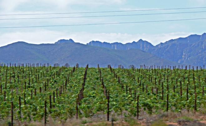 wineries-nr-robertson