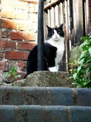 a ludlow cat
