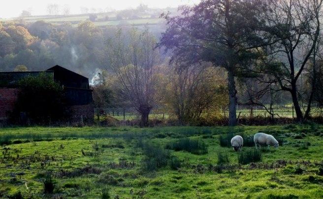 corve water meadow