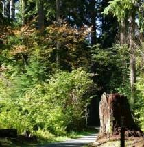 wren trail