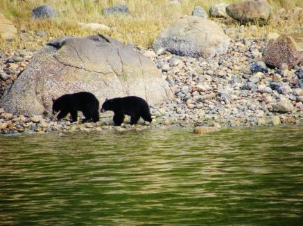 bear cubs small