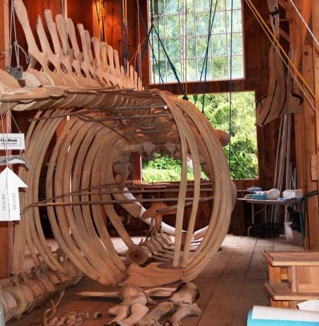 whalebones in the museum