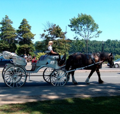 Horse and Carriage, Niagara