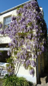The Wisteria Tea-Room