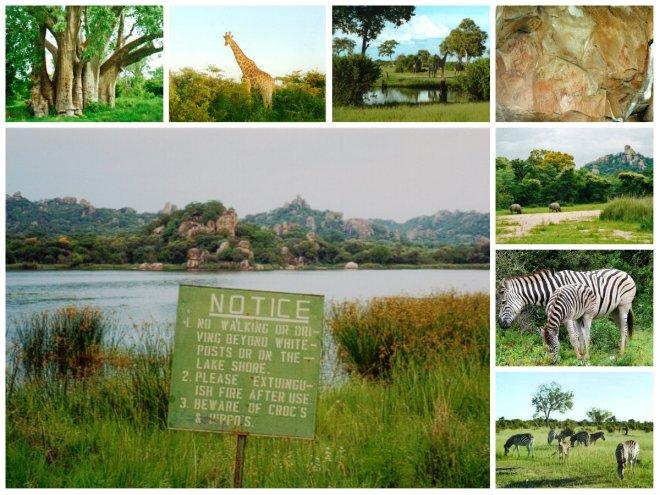 Main: Matobo Hills Sign Clockwise: Baobab Tree; Giraffes in Hwange; White Rhinis in Matobo Hills; Zebra in Hwange