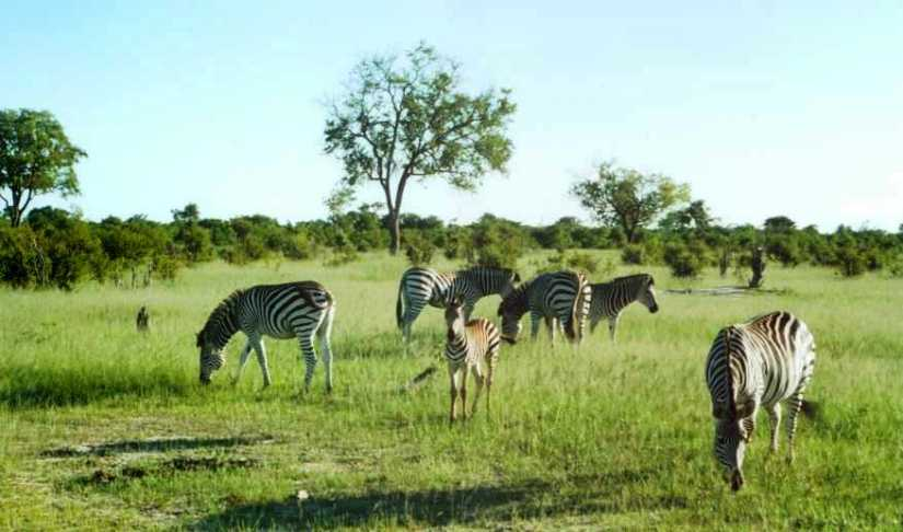 Aardwolves to Zebras: Snippets from an African Diary