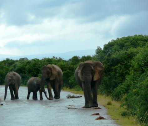 elephant family 3