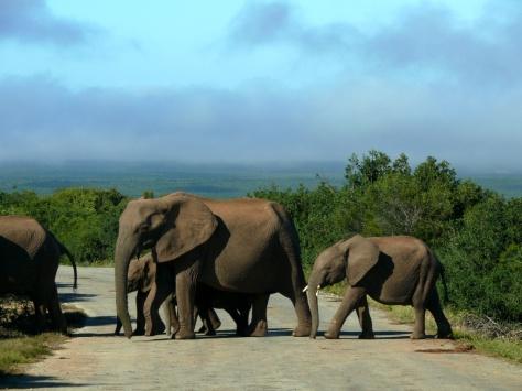 elephant family 4