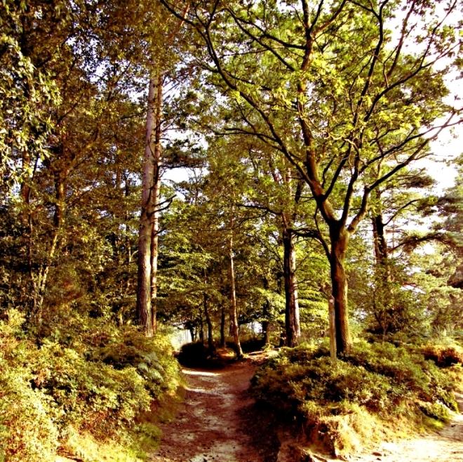 Black Down Trail