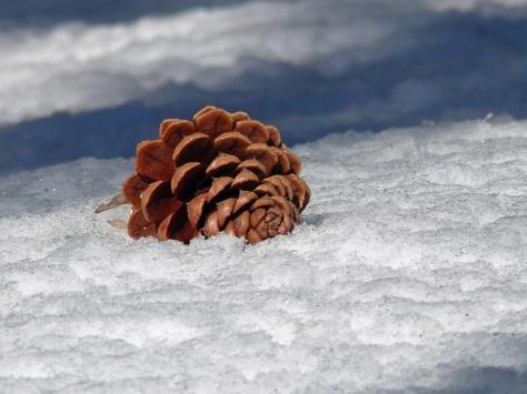 A lone cone
