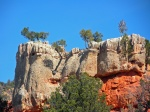 Ponderosa Pines cling to Cap Rock