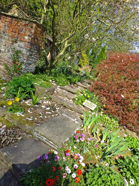 path-in-the-spring-garden
