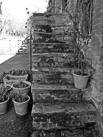 Steps on the Cider Press