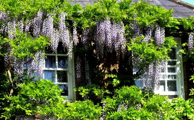 A Lingering Look at Windows: In theGarden