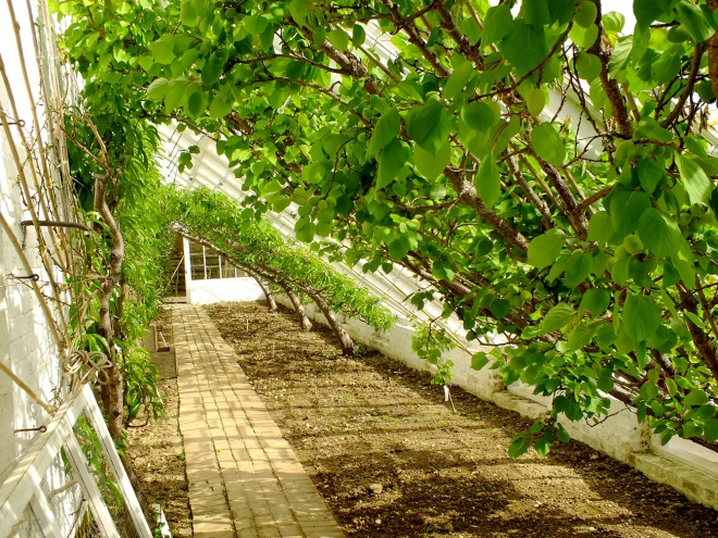 v-lost-gardens-peach