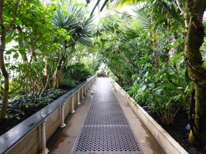 V - Victorian Palm House (2)