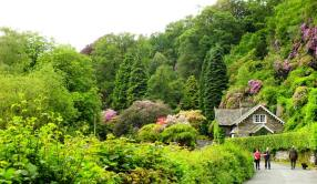 Beautiful Woodland
