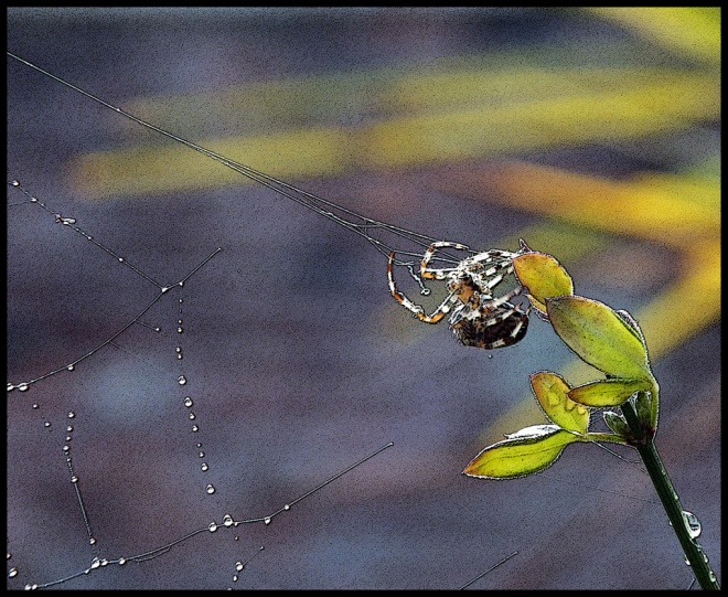autumn-spider