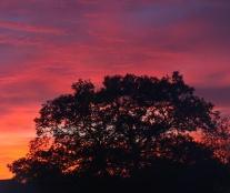 technicolour-sunset-1