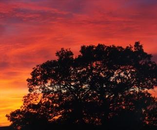 technicolour-sunset-5