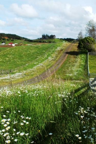 Hills Rd