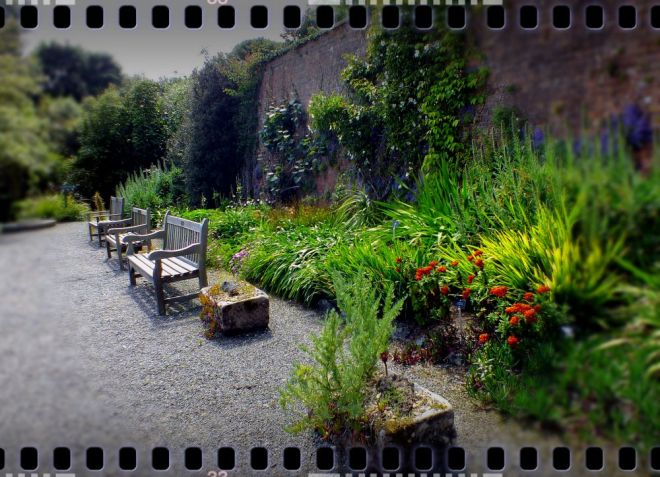 logan botanic garden (2)