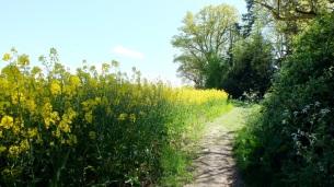Walking by the field
