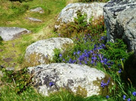 Late bluebells