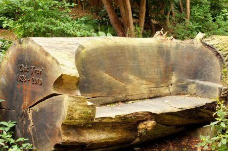 abbotsbury garden bench (1)