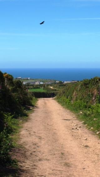 The bridleway