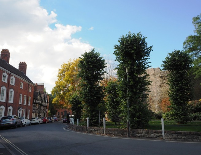 The lime (linden) trees