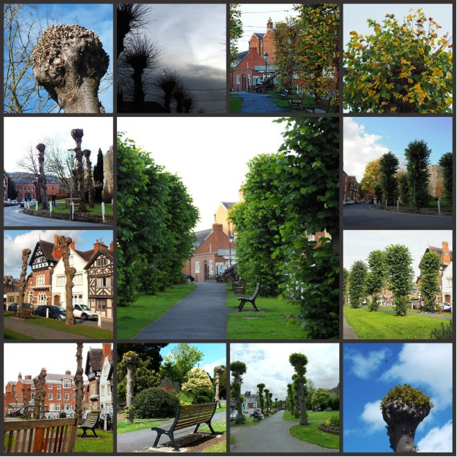 lime tree collage