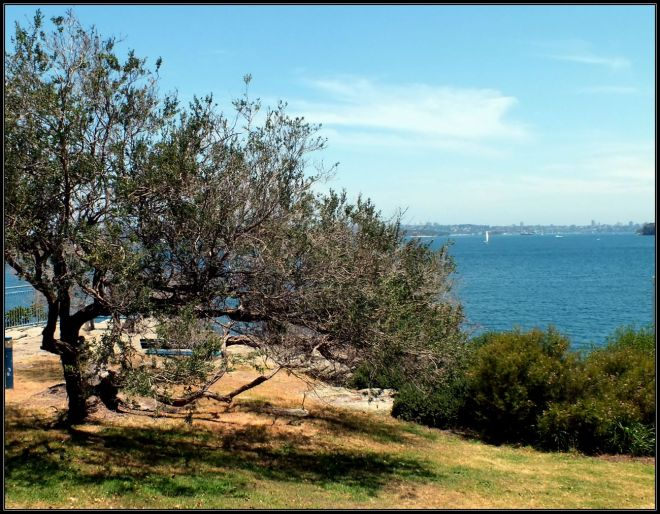 manly point (2)