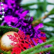 Christmas tree (December)