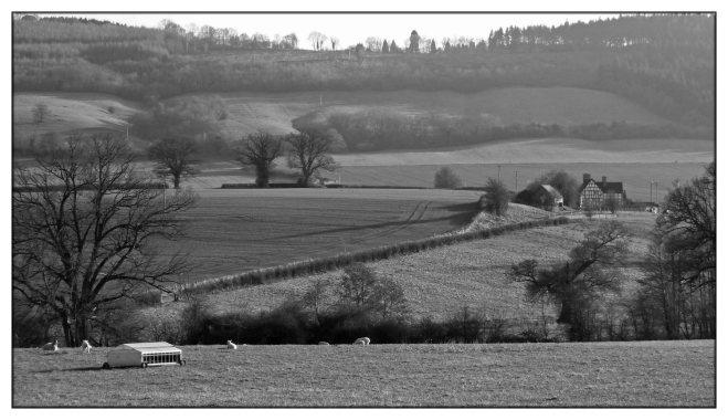 rural-landscape-b&w