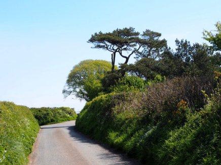 A Devonshire lane