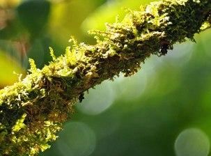 moss or lichen (2)