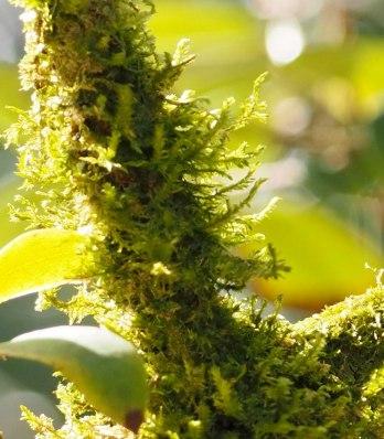 moss or lichen (3)